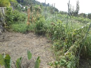 草抜き前2